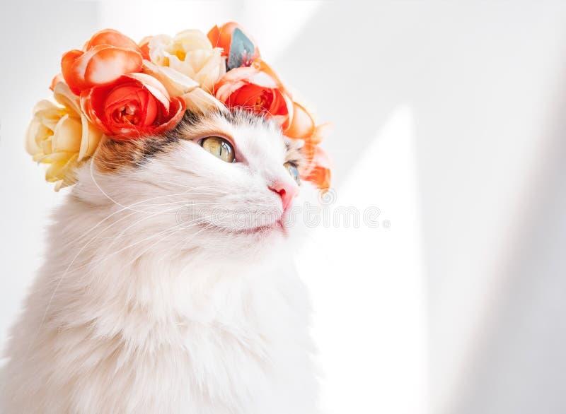 Красивый кот ситца с венком на его голове Милая киска в diadem цветков на ее голове сидит в солнце и взглядах стоковое фото