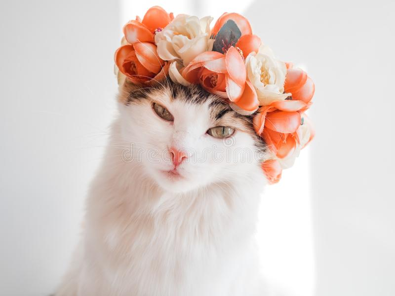 Красивый кот ситца с венком на его голове Милая киска в diadem цветков на ее голове сидит в солнце и взглядах стоковые фото