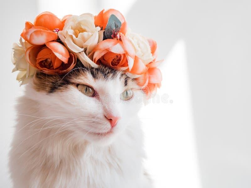 Красивый кот ситца с венком на его голове Милая киска в diadem цветков на ее голове сидит в солнце и взглядах стоковое изображение