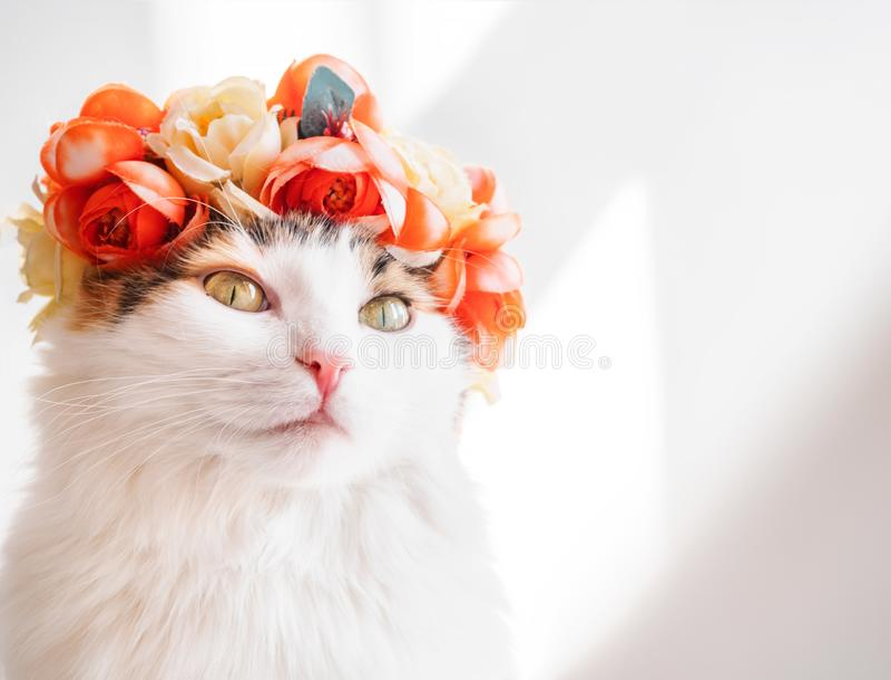 Красивый кот ситца с венком на его голове Милая киска в diadem цветков на ее голове сидит в солнце и взглядах стоковое изображение rf