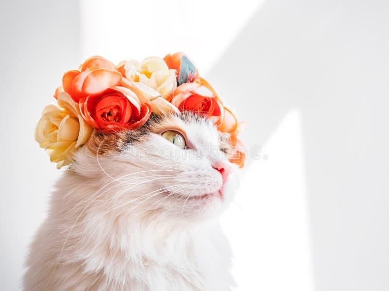 Красивый кот ситца с венком на его голове Милая киска в diadem цветков на ее голове сидит в солнце и взглядах стоковое фото rf