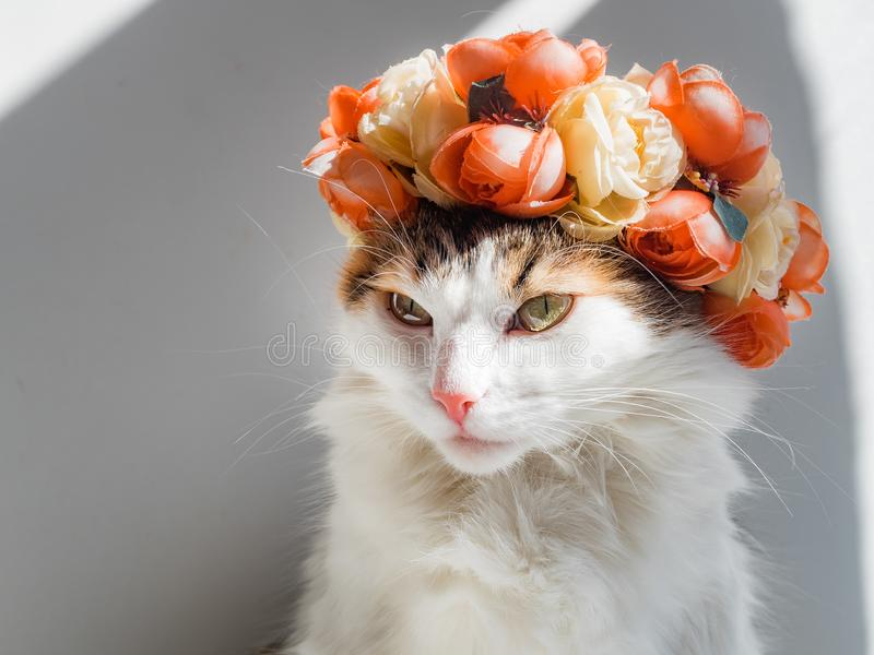 Красивый кот ситца с венком на его голове Милое сердитое kittty сидит в цветках diadem на ее голове сидит в солнце и стоковые фотографии rf