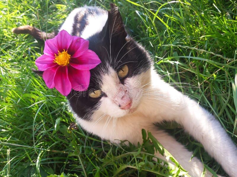 Красивый кот с цветком на голове стоковые изображения