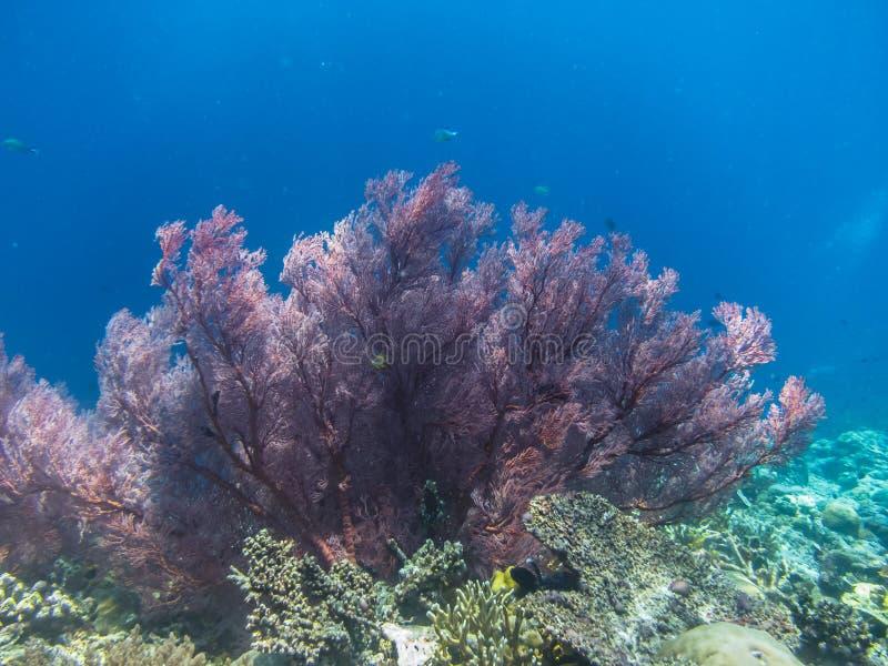 красивый красный коралл стоковое изображение rf