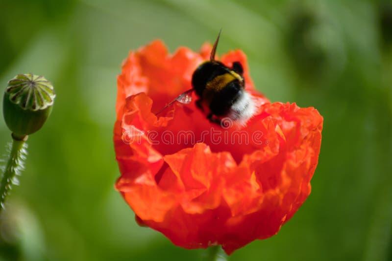 Красивый красный цветок стоковое изображение