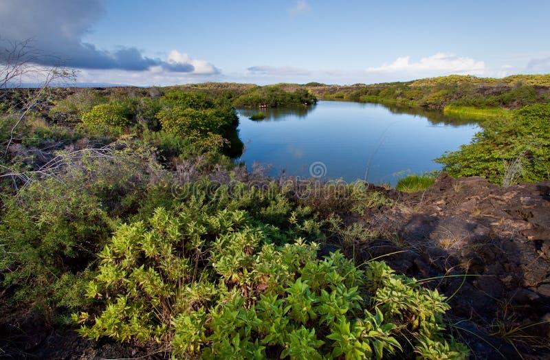 Красивый красочный ландшафт озера фламинго внутри стоковые изображения