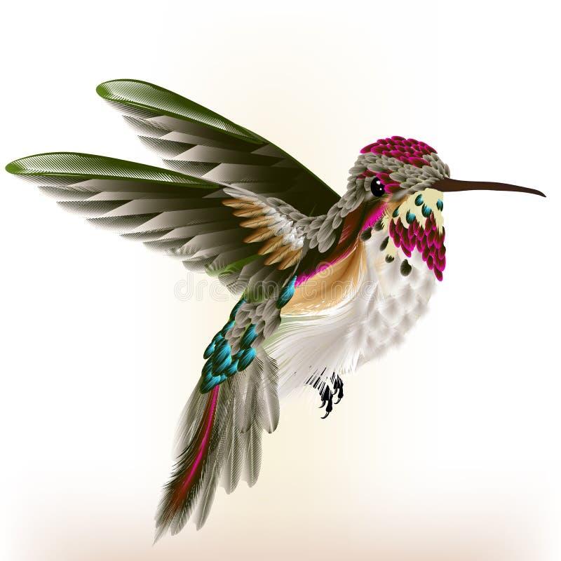 Красивый красочный колибри в мухе бесплатная иллюстрация