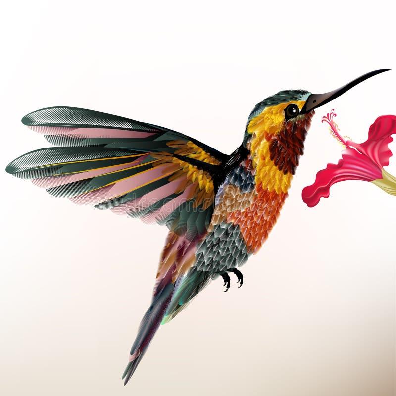 Красивый красочный колибри с цветком иллюстрация вектора