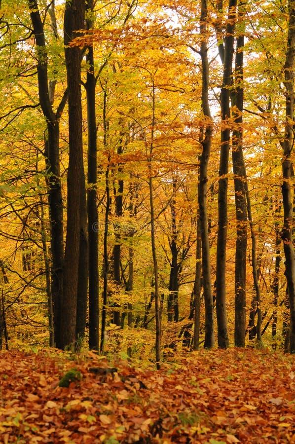 Красивый красочный лес в осени, ландшафте стоковое фото rf