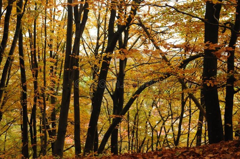 Красивый красочный лес в осени, ландшафте стоковое изображение rf