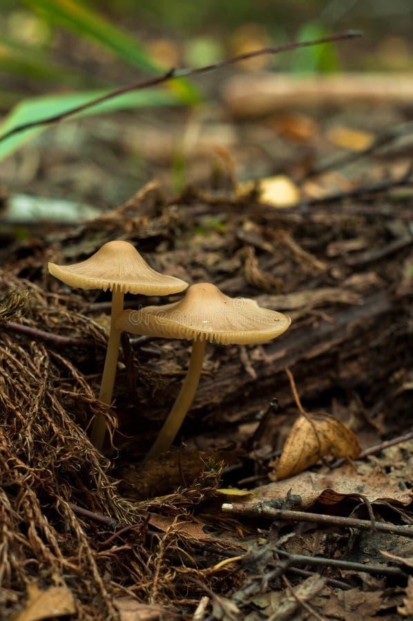 Красивый крупный план грибов леса стоковые изображения rf