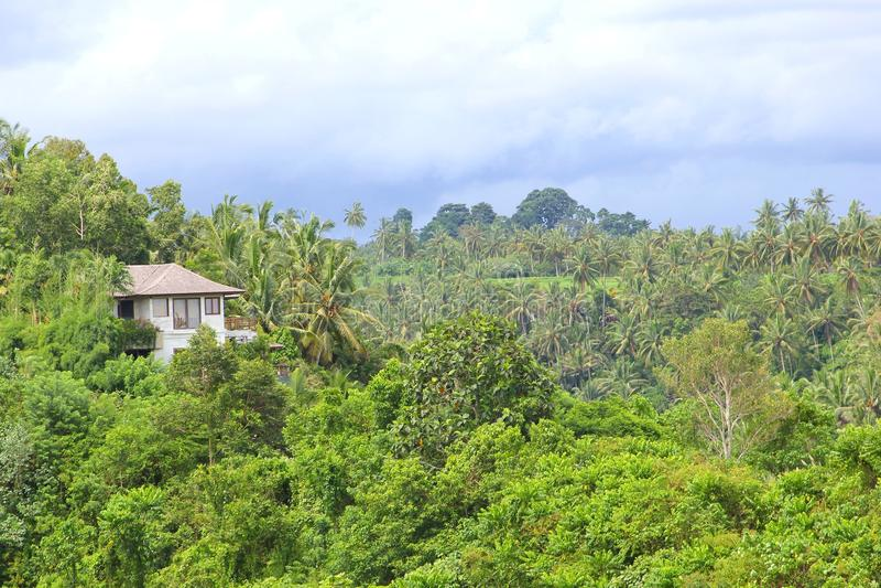 Красивый курорт в тропическом тропическом лесе стоковая фотография rf