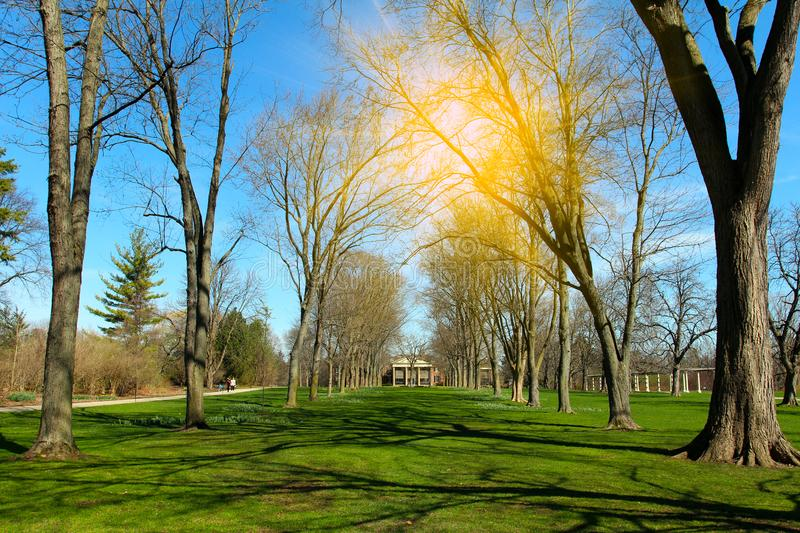 Красивый ландшафт весны в одичалом парке природы стоковое фото rf