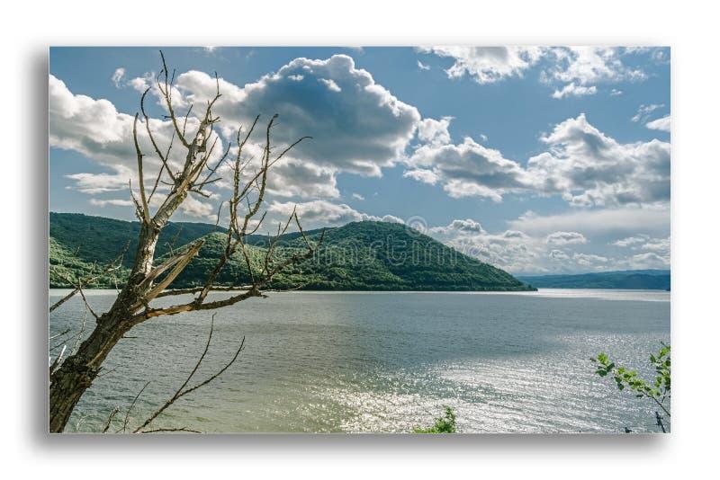 Красивый ландшафт в который сухое дерево появляется, и перед им большое река и горы предусматриванные с растительностью Идти стоковые фотографии rf