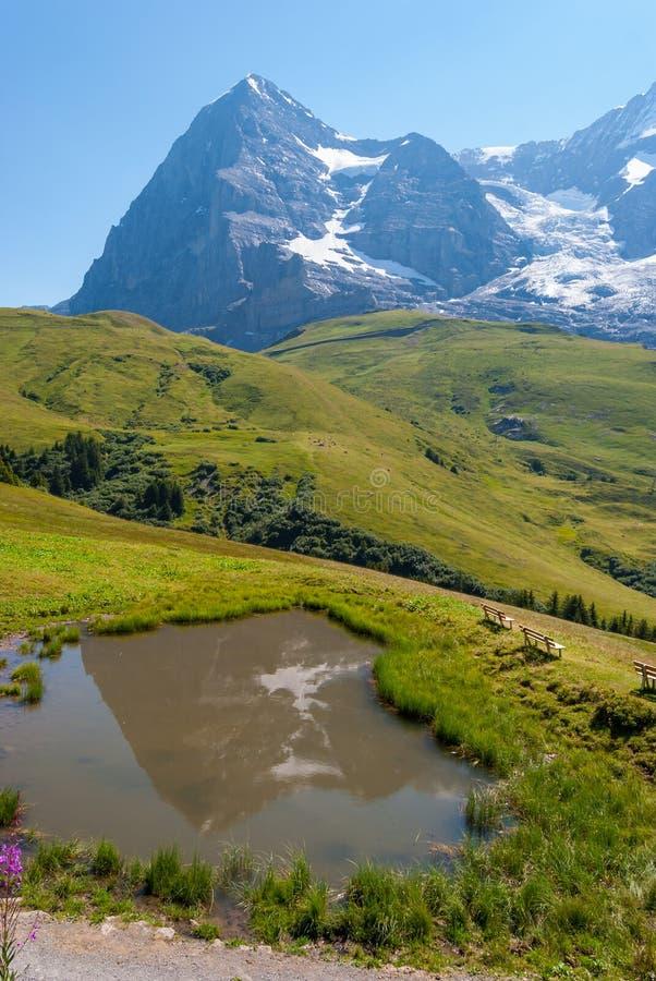 красивый ландшафт горы лета обозревая пик Eiger и небольшое озеро Bernese Oberland, Швейцария стоковая фотография rf