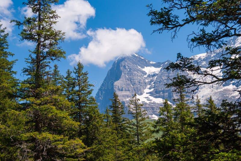 красивый ландшафт горы лета с взглядами пика Eiger Bernese Oberland, Швейцария стоковое фото rf