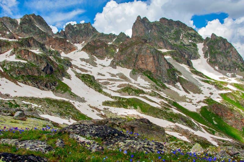 Красивый ландшафт горы с зелеными наклонами, цветками и снегом стоковое изображение rf