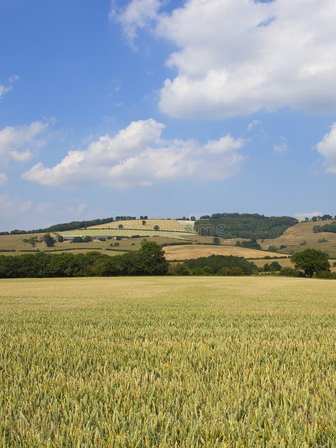 Красивый ландшафт заплатки в летнем времени стоковая фотография