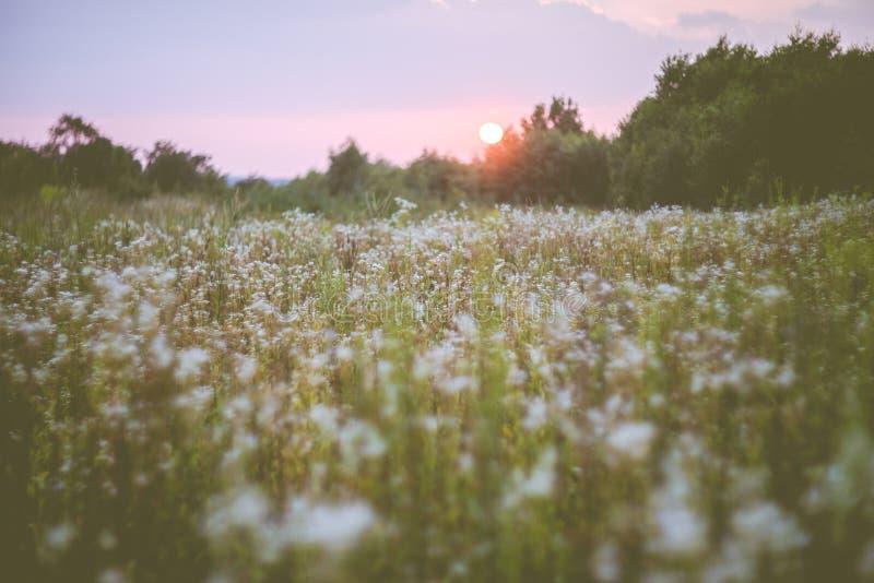 Красивый ландшафт захода солнца природы, дикий луг стоковые изображения