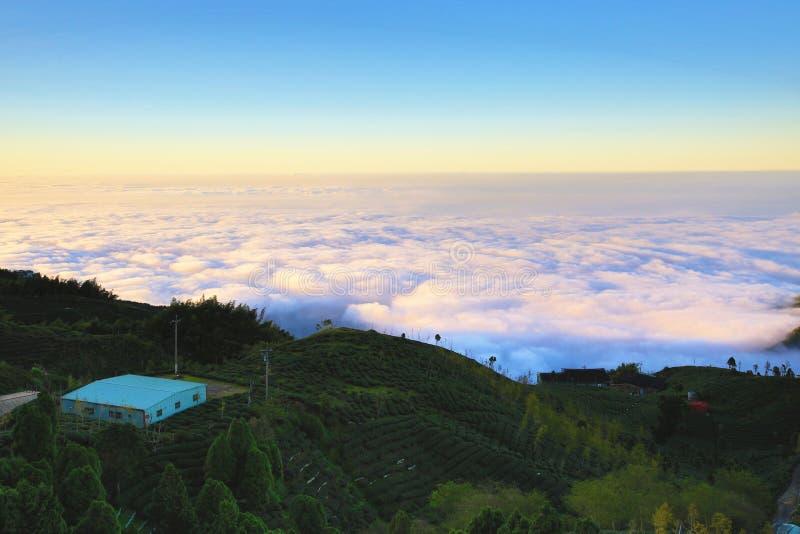 Красивый ландшафт захода солнца с деревьями гинкго, плантациями чая и облаками стоковое фото rf