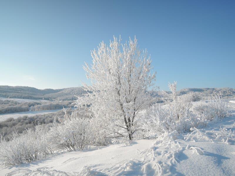 Красивый ландшафт зимы со снег-белыми деревьями предусматриванными с днем заморозка ярким солнечным стоковое изображение rf