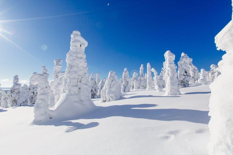 Красивый ландшафт зимы со снежными деревьями в Лапландии, Финляндии зима замерли пущей, котор стоковые фото