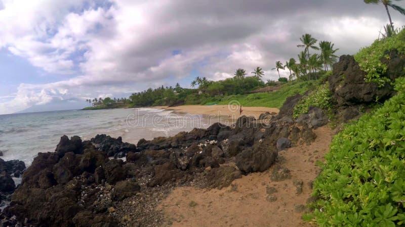 Красивый ландшафт и тропический пляж с пальмами в Гаваи, США стоковые изображения rf