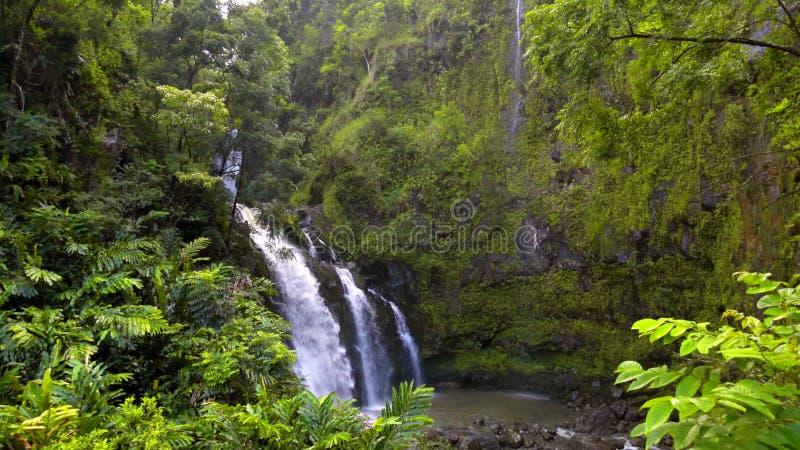 Красивый ландшафт и тропический пляж с пальмами в Гаваи, США стоковые фотографии rf