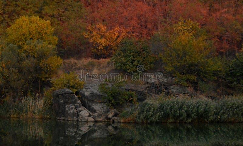 Красивый ландшафт осени около реки стоковое фото
