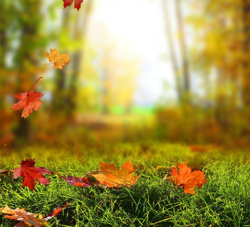 Красивый ландшафт осени с желтыми деревьями, зеленым цветом и солнцем colo стоковые фотографии rf