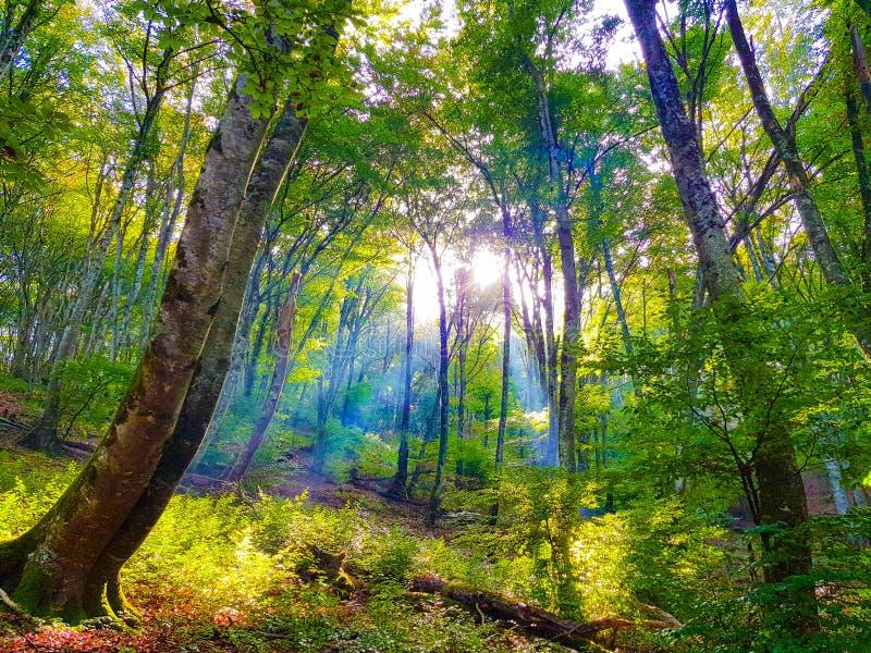 Красивый ландшафт осени с желтыми деревьями и солнцем Красочная листва в парке Падать выходит естественная предпосылка стоковое фото