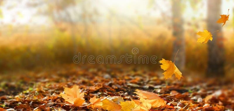 Красивый ландшафт осени с желтыми деревьями и солнцем стоковое фото rf