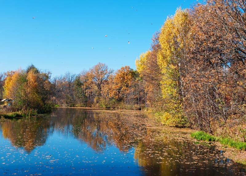 Красивый ландшафт осени с прудом стоковая фотография