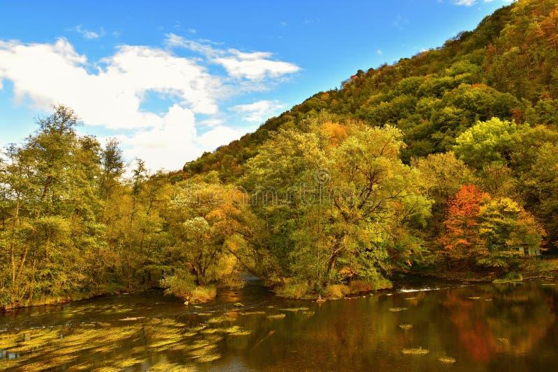 Красивый ландшафт осени с рекой и красочными деревьями в лесе на заходе солнца Национальный парк Австрия долины Thaya стоковое изображение rf