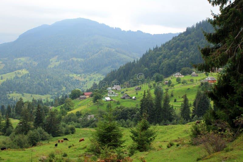 Красивый ландшафт с взглядом к деревне, коровам на выгоне и mo стоковое фото