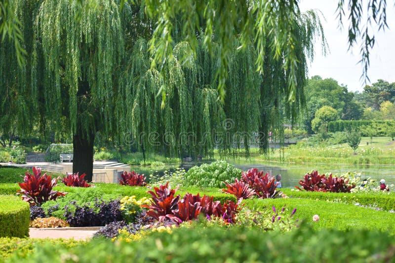 Красивый ландшафт с деревьями воли, изгородями и бургундскими цветками стоковое фото rf