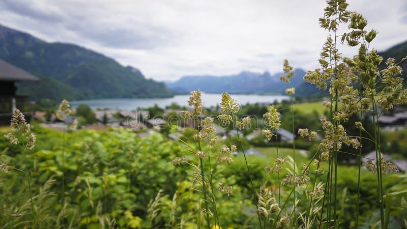 Красивый ландшафт с зелеными горами, долина Aps, уютные hauses стоковая фотография