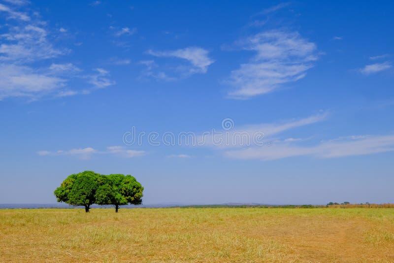 Красивый ландшафт с 2 славными деревьями, Bom Jardim Nobres Pantanal, Mato Grosso, Бразилия, Южная Америка стоковые изображения