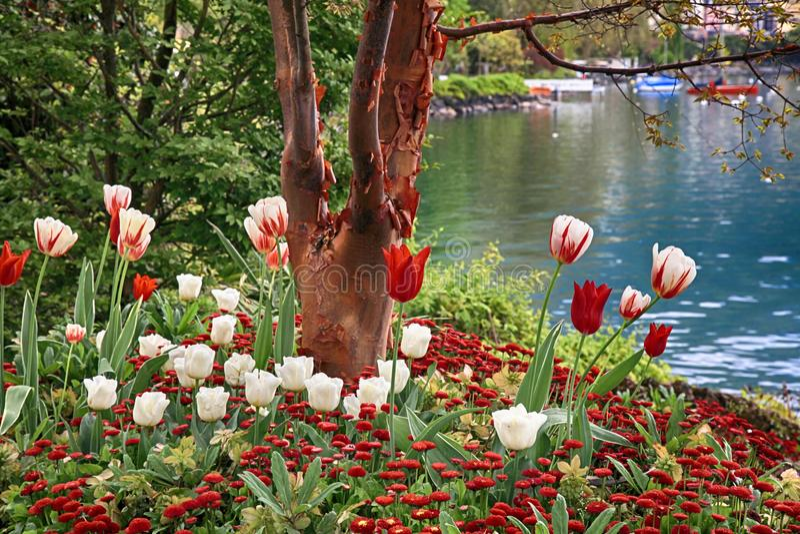 Красивый ландшафт с цветками и женевским озером, Монтрё, Swit стоковые фотографии rf
