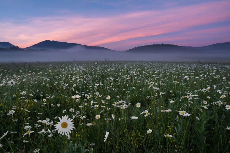 Красивый ландшафт, туман утра, восход солнца на поле стоцвета Крым стоковые изображения