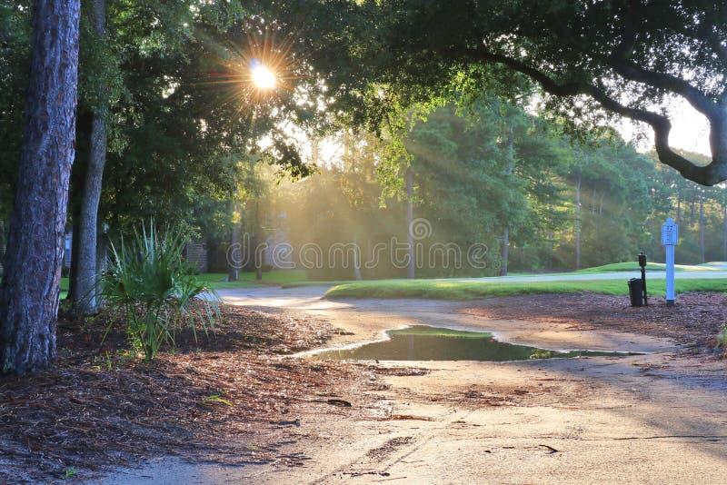 Красивый ландшафт утра лета с южным полем для гольфа стоковая фотография rf