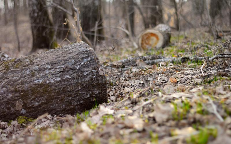 Красивый лес весны, отрезок вниз с дерева стоковые фотографии rf
