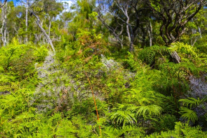 Красивый лес в Новой Зеландии стоковая фотография rf