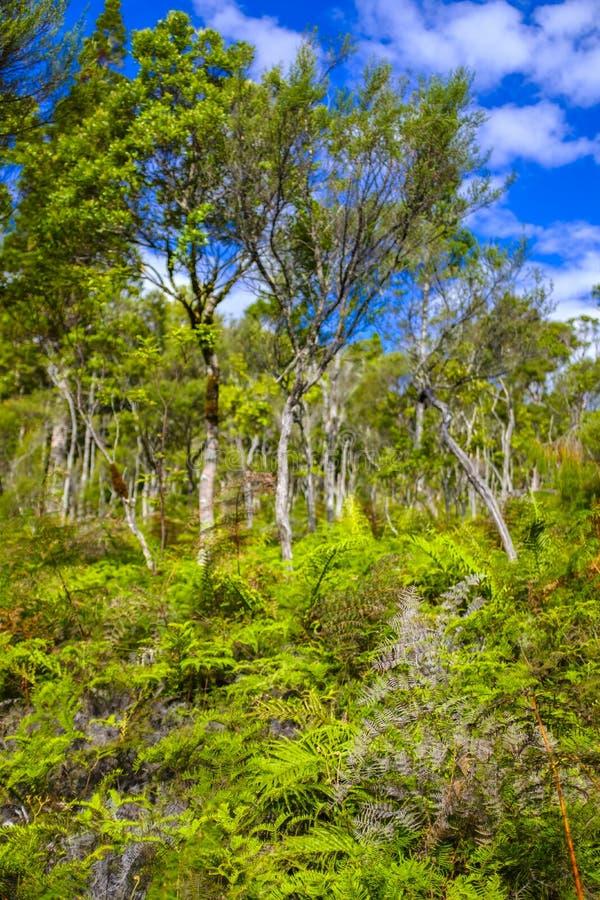 Красивый лес в Новой Зеландии стоковая фотография