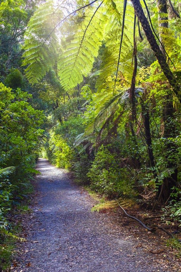 Красивый лес в Новой Зеландии стоковые фото