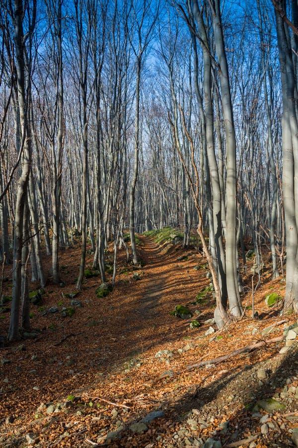 Красивый лес в осени, Польша стоковое фото rf