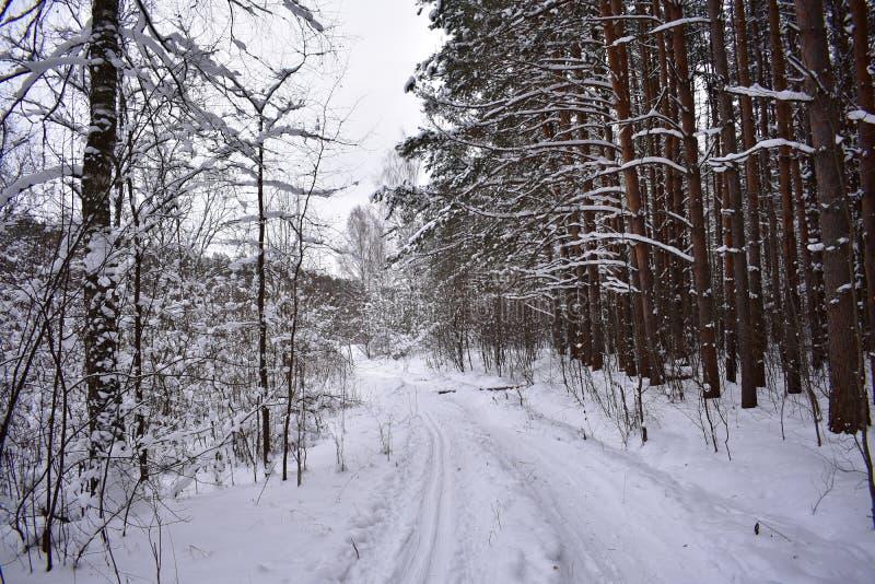 Красивый лес в снеге, снежная дорога, зима вокруг, сказка зимы стоковая фотография