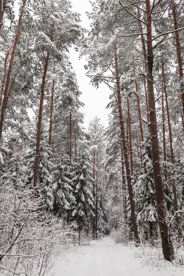 Красивый лес зимы со снежными деревьями Абстрактные предпосылки фантазии с волшебной книгой стоковое фото rf