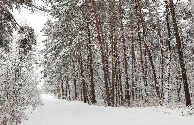 Красивый лес зимы со снежными деревьями и белой дорогой Абстрактные предпосылки фантазии с волшебной книгой стоковая фотография