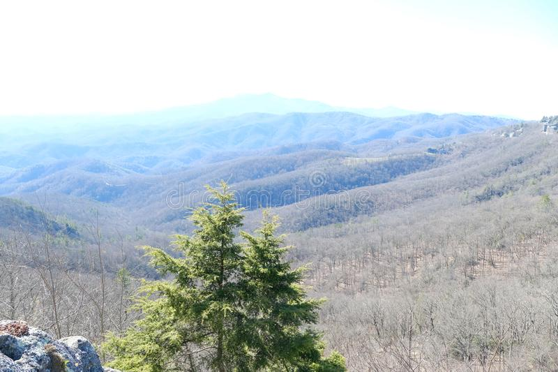 Красивый лес ландшафта взгляда холма с голубым небом стоковые изображения rf